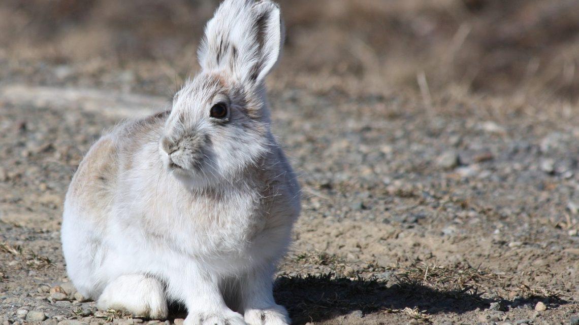 Wat kost een konijn?