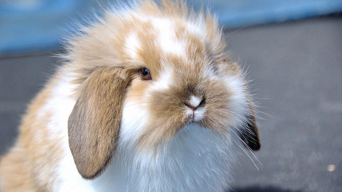 Help mijn konijn heeft diaree