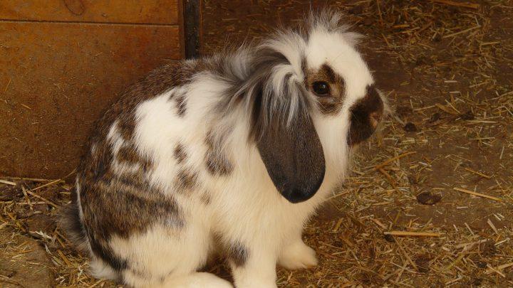 Hoe kan ik het beste mijn konijn verzorgen?