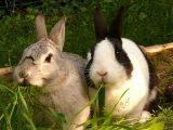 2 konijnen
