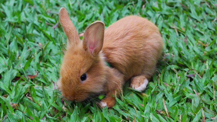 Hoe kan ik spelen met mijn konijn?